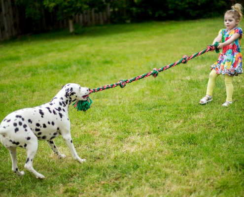 Neue-Wege.dog Hundeseminar Let´s play the game