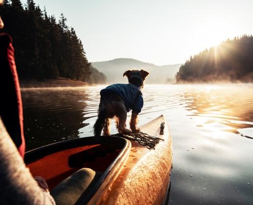 Neue-Wege.dog Hundeseminar Vertrauensvoll durchs Leben